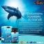 Auswelllife Pure Squalene Tasmanian 1000mg น้ำมันตับปลาฉลาม thumbnail 3
