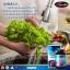 Auswelllife Liver Tonic 35,000 mg อาหารเสริมล้างตับ ขับสารพิษ thumbnail 3