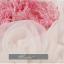 พร้อมเช่า ชุดแฟนซี เช่า 500 ชุดราตรีสั้น เกาะอก สีกุหลาบแต่งดอกไม้สามมิติ พองฟูน่ารักมาก thumbnail 13