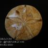 ฟอสซิล Sand Dollar FOSSIL Echinoid จาก Madagascar #SDF001
