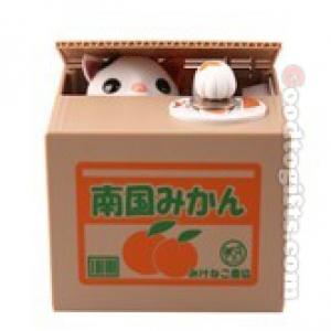 แมวกล่องส้ม