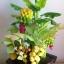 C016-สวนต้นไม้มงคล ส้ม มะยม กล้วย ขนุน 3-10 นิ้ว thumbnail 4