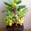 C016-สวนต้นไม้มงคล ส้ม มะยม กล้วย ขนุน 3-10 นิ้ว thumbnail 3
