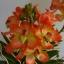 V005-แวนด้าสีส้มบนกระถางไม้ 3 ช่อ ( 40 ดอก) thumbnail 4