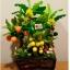 C025-สวนต้นไม้มงคล มะยม ส้ม กล้วย ขนุน_ไซร์ 3-12 นิ้ว thumbnail 2