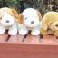 ตุ๊กตาน้องหมาบีเกิ้ล Amangs thumbnail 8