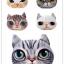 (พร้อมส่ง) หมอนหน้าน้องแมว 3 มิติ (50*40 cm.) thumbnail 1