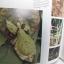 หนังสือภาพสีพืชและสัตว์ที่กำลังจะสูญพันธุ์ในประเทศไทย Thailand's Vanishing Flora & Fauna thumbnail 7