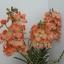 V005-แวนด้าสีส้มบนกระถางไม้ 3 ช่อ ( 40 ดอก) thumbnail 7