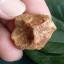 หินรูปทรงประหลาดจากทะเลทรายโกบี GOBI Fish Roe Stone #GOBI008 thumbnail 1