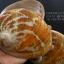 เปลือกหอยเป๋าฮื้อแท้ (Abalone) Australia ผิวธรรมชาติ ขนาดใหญ่ 6 นิ้ว สำหรับตกแต่งหรือสะสม thumbnail 1