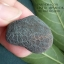 หินรูปทรงประหลาดจากทะเลทรายโกบี GOBI Filament Stone #GOBI002 thumbnail 1