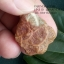 หินรูปทรงประหลาดจากทะเลทรายโกบี GOBI Fish Roe Stone #GOBI008 thumbnail 9