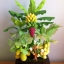 C016-สวนต้นไม้มงคล ส้ม มะยม กล้วย ขนุน 3-10 นิ้ว thumbnail 1