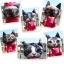 (พร้อมส่ง) หมอนหน้าน้องแมว 3 มิติ (50*40 cm.) thumbnail 9