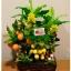 C025-สวนต้นไม้มงคล มะยม ส้ม กล้วย ขนุน_ไซร์ 3-12 นิ้ว thumbnail 3