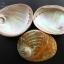 เปลือกหอยเป๋าฮื้อแท้ (Abalone) Australia ผิวธรรมชาติ ขนาดใหญ่ 6 นิ้ว สำหรับตกแต่งหรือสะสม thumbnail 3