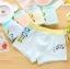 กางเกงในเด็ก คละสี แพ็ค 20 ตัว ไซส์ M อายุ2-3 ปี thumbnail 3