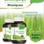 Neriis Greenphyll Wheatgrass