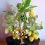 C006-สวนต้นไม้มงคล มะยม ส้ม กล้วย ขนุน_ไซร์ 3-9 นิ้ว thumbnail 3