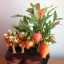 C019-สวนต้นไม้มงคล ทับทิม มะยม ส้ม กล้วย ขนุน_ไซร์ 3-6 นิ้ว thumbnail 2