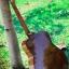 กีตาร์โปร่งไฟฟ้า YAMAHA F310 EQ Gtone GT-3 thumbnail 4