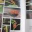 หนังสือภาพสีพืชและสัตว์ที่กำลังจะสูญพันธุ์ในประเทศไทย Thailand's Vanishing Flora & Fauna thumbnail 11