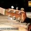 Veelah V3-DCE with Hardcase thumbnail 10