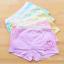 กางเกงในเด็ก คละสี แพ็ค 20 ตัว ไซส์ XL อายุ 3-5 ปี thumbnail 1