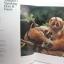 หนังสือภาพสีพืชและสัตว์ที่กำลังจะสูญพันธุ์ในประเทศไทย Thailand's Vanishing Flora & Fauna thumbnail 3