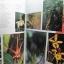 หนังสือภาพสีพืชและสัตว์ที่กำลังจะสูญพันธุ์ในประเทศไทย Thailand's Vanishing Flora & Fauna thumbnail 6
