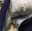 เสื้อ (ด้านในมีขน) สีกรม แพ็ค 5 ชุด ไซส์ 7-9-11-13-15 thumbnail 3