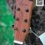 Amari AM-428C EQ Gtone GT-3 thumbnail 3