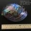เปลือกหอยเป๋าฮื้อแท้ (Abalone) นิวซีแลนด์ ขัด สีปีกแมลงทับ #HA007 thumbnail 5