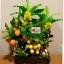 C025-สวนต้นไม้มงคล มะยม ส้ม กล้วย ขนุน_ไซร์ 3-12 นิ้ว thumbnail 1