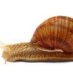เมือกหอกทาก หรือ snail secretion
