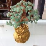 ต้นกรีนอเวนเจอรีน เสริมความโชคดี ค้าขายเจรจา