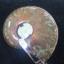 จี้ฟอลซิลแอมโมไนต์ประกายรุ้ง ( Rainbow Ammonite ) thumbnail 6