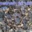 ขายส่ง/ปลีก กระชายดำป่า อบแห้ง (1 กก.) thumbnail 1
