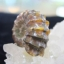 ฟอสซิลนอติลุส (Fossil Nautilus) thumbnail 2