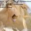 ถุงจัมโบ้ตัดใหม่ (สีเบส)1 ตัน, ถุงจัมโบ้ thumbnail 2