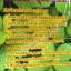 พิเศษเจียวกู่หลาน แท้ 100% คัดพิเศษเกรดA ชนิดพิเศษปลูกในแปลงเกษตร สาธิต ดูแลอย่างดี (ชนิดหอม) thumbnail 4