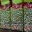 ชาอูหลงก้านอ่อน เบอร์ 17 (บรรจุซองฟลอยด์สูญญากาศ) thumbnail 6