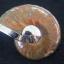จี้ฟอลซิลแอมโมไนต์ประกายรุ้ง ( Rainbow Ammonite ) thumbnail 2