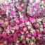 ขายส่งชาดอกกุหลาบคัดพิเศษเกรดA (อบแห้ง) 1 กก thumbnail 10