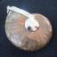 จี้ฟอลซิลแอมโมไนต์ประกายรุ้ง ( Rainbow Ammonite ) thumbnail 5