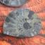 แอมโมไนต์ไพไรต์ ( Pyrite Ammonite ) thumbnail 3