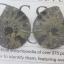 แอมโมไนต์ไพไรต์ ( Pyrite Ammonite ) thumbnail 1