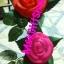 ดอกกุหลาบไฟกระพริบ thumbnail 2