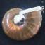 จี้ฟอลซิลแอมโมไนต์ประกายรุ้ง ( Rainbow Ammonite ) thumbnail 3